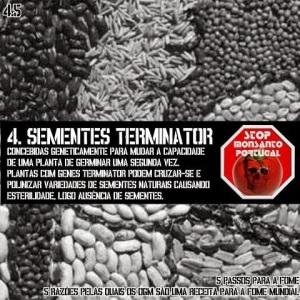 monsanto terminator - sementes suicidas
