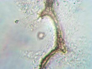 biocodedotinfo 3 myfilament-0013_png